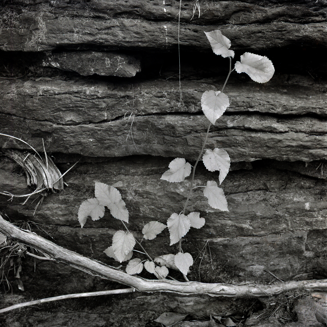 Photography by John Sykes Jr. (338)