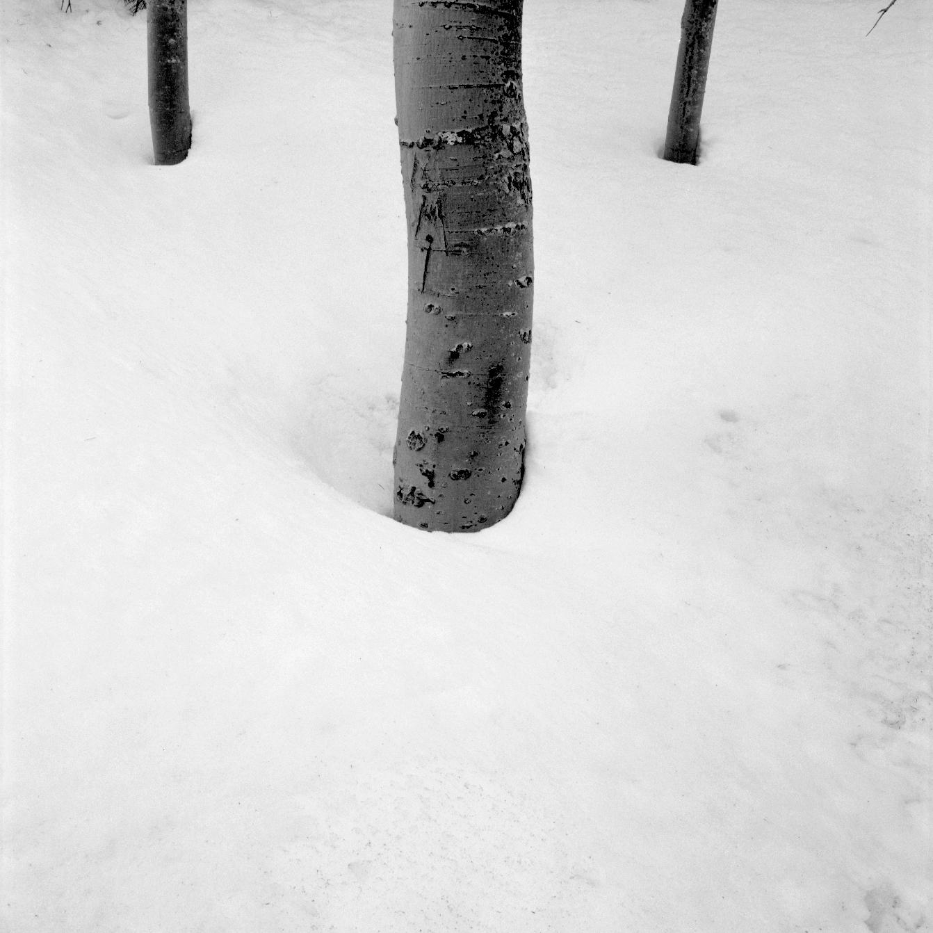 Photography by John Sykes Jr. (382)